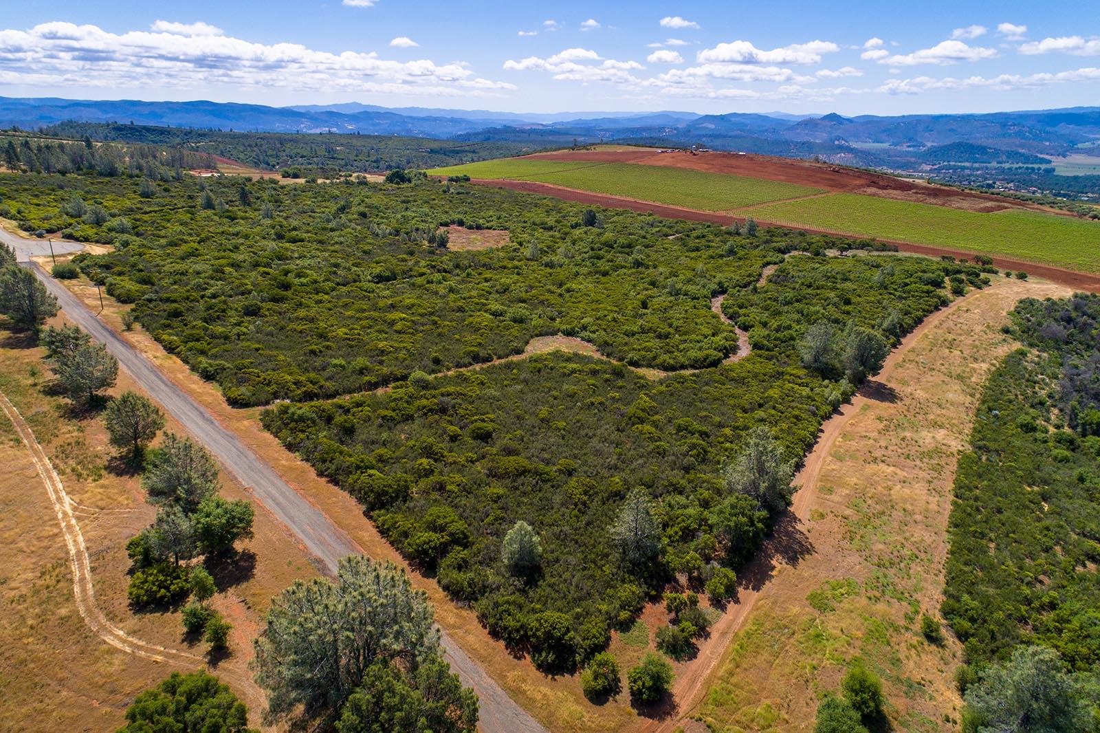 Ranch Road 40 acre vineyard
