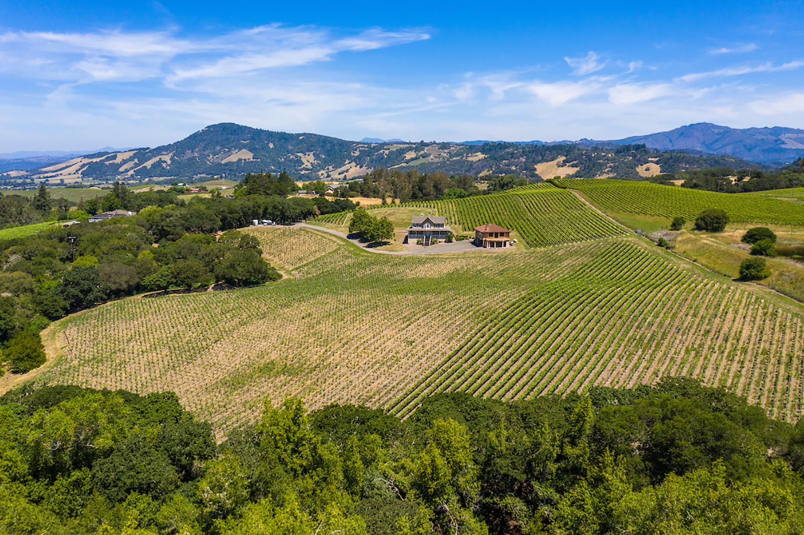 24 Acre Triple AVA Vineyard Estate and Guest House